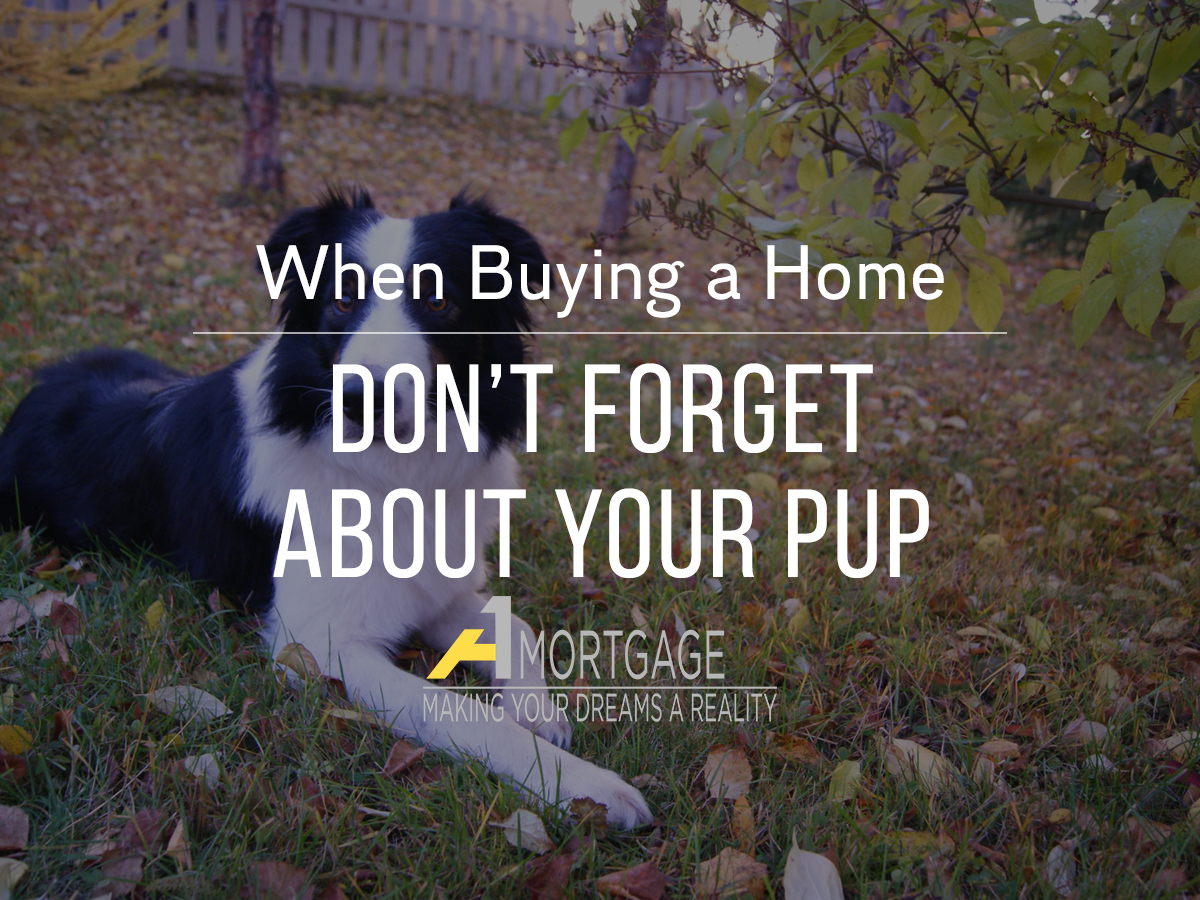 Buying a home with your dog in mind